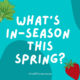 What's In Season This Spring?